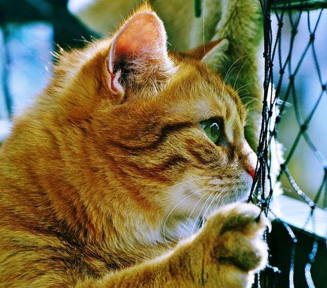 Подборка фото с котиками. Милые создания. lublusebya-lublusebya-30531027042019-10 картинка lublusebya-30531027042019-10