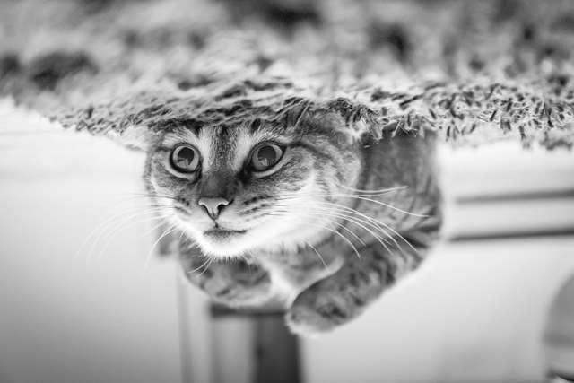 Подборка фото с котиками. Милые создания. lublusebya-lublusebya-30531027042019-11 картинка lublusebya-30531027042019-11