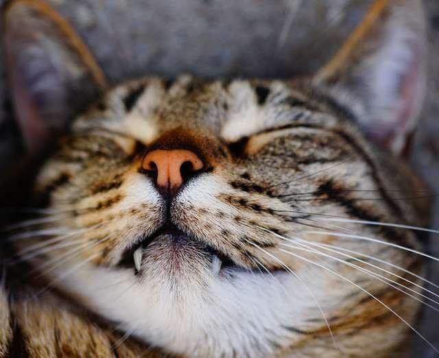 Подборка фото с котиками. Милые создания. lublusebya-lublusebya-30531027042019-12 картинка lublusebya-30531027042019-12