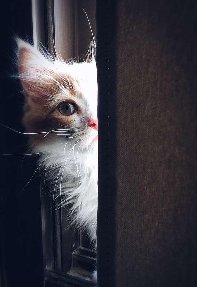 Подборка фото с котиками. Милые создания. lublusebya-lublusebya-30531027042019-13 картинка lublusebya-30531027042019-13