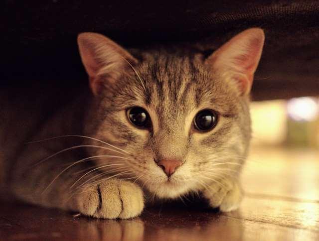 Подборка фото с котиками. Милые создания. lublusebya-lublusebya-30531027042019-14 картинка lublusebya-30531027042019-14