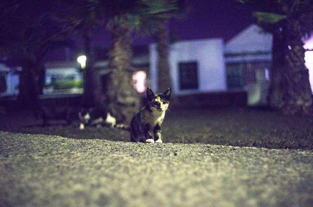Подборка фото с котиками. Милые создания. lublusebya-lublusebya-30531027042019-15 картинка lublusebya-30531027042019-15