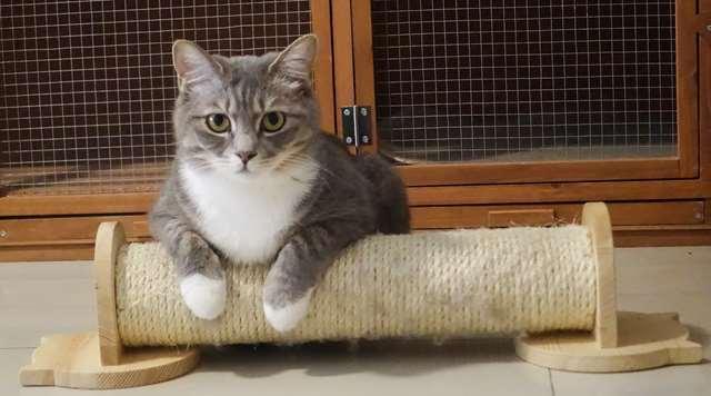 Подборка фото с котиками. Милые создания. lublusebya-lublusebya-30531027042019-17 картинка lublusebya-30531027042019-17