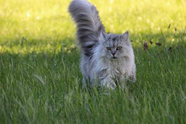 Подборка фото с котиками. Милые создания. lublusebya-lublusebya-30531027042019-2 картинка lublusebya-30531027042019-2