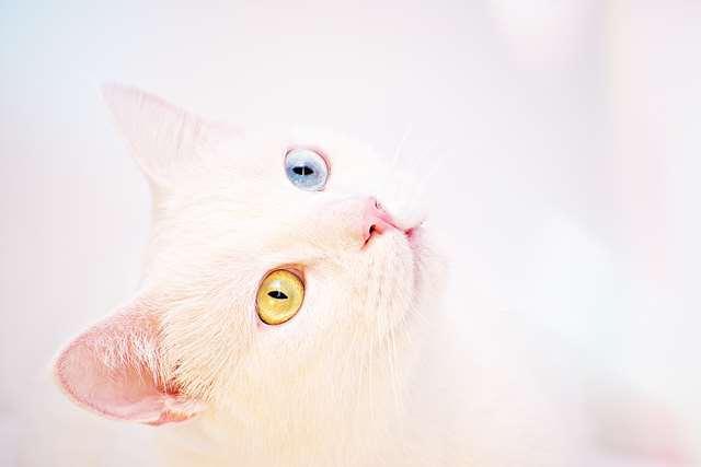 Подборка фото с котиками. Милые создания. lublusebya-lublusebya-30531027042019-3 картинка lublusebya-30531027042019-3