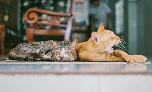 Подборка фото с котиками. Милые создания. lublusebya-lublusebya-30531027042019-4 картинка lublusebya-30531027042019-4