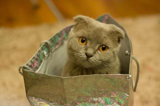 Подборка фото с котиками. Милые создания. lublusebya-lublusebya-30531027042019-5 картинка lublusebya-30531027042019-5
