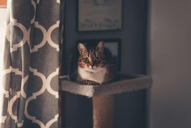 Подборка фото с котиками. Милые создания. lublusebya-lublusebya-30531027042019-7 картинка lublusebya-30531027042019-7