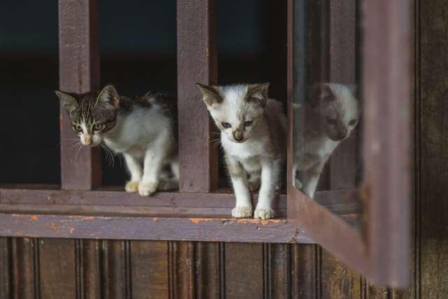 Подборка фото с котиками. Милые создания. lublusebya-lublusebya-30531027042019-8 картинка lublusebya-30531027042019-8