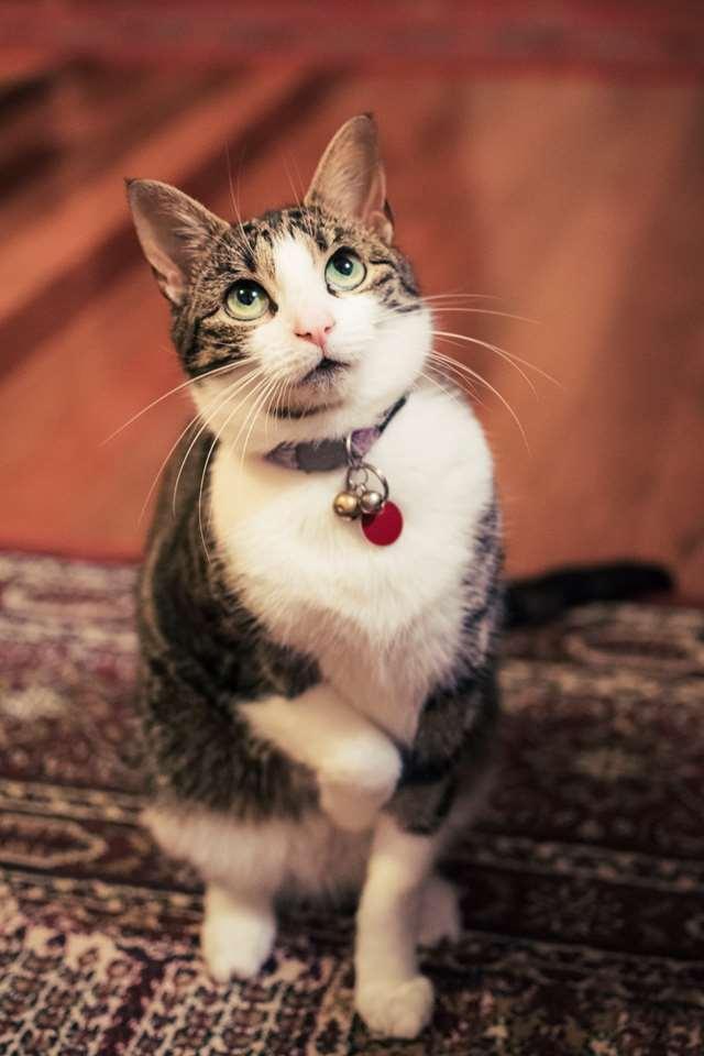 Подборка фото с котиками. Милые создания. lublusebya-lublusebya-30531027042019-9 картинка lublusebya-30531027042019-9