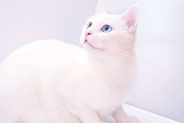 Подборка фото с котиками. Милые создания. lublusebya-lublusebya-36351227042019-1 картинка lublusebya-36351227042019-1