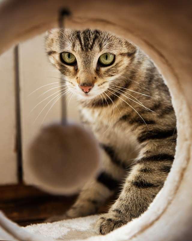 Подборка фото с котиками. Милые создания. lublusebya-lublusebya-36351227042019-11 картинка lublusebya-36351227042019-11