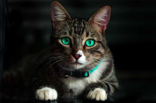 Подборка фото с котиками. Милые создания. lublusebya-lublusebya-36351227042019-14 картинка lublusebya-36351227042019-14