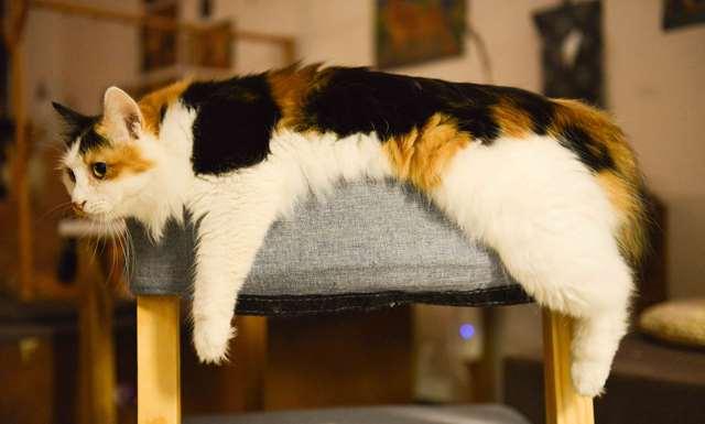 Подборка фото с котиками. Милые создания. lublusebya-lublusebya-36351227042019-15 картинка lublusebya-36351227042019-15