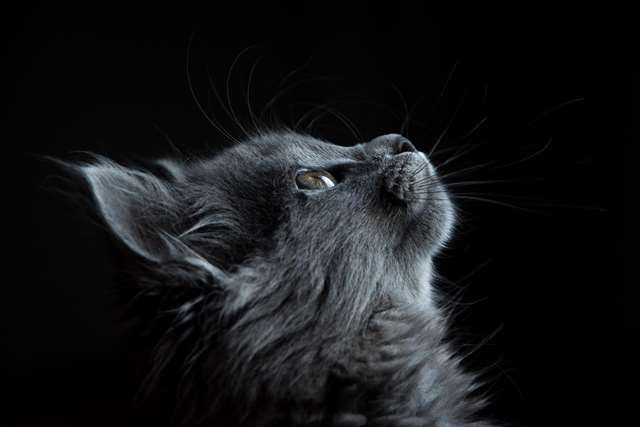 Подборка фото с котиками. Милые создания. lublusebya-lublusebya-36351227042019-16 картинка lublusebya-36351227042019-16