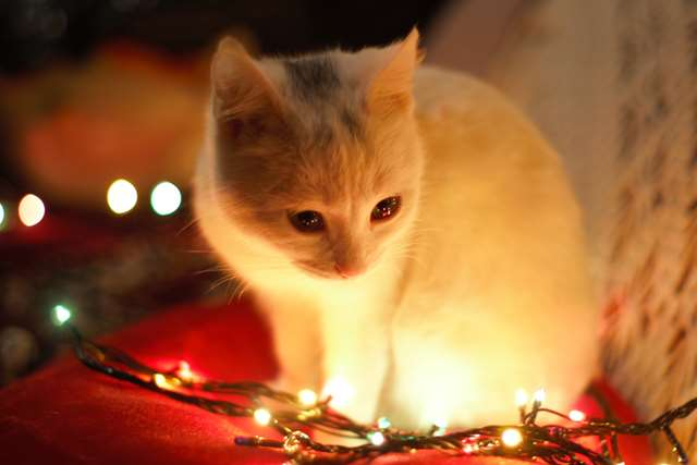 Подборка фото с котиками. Милые создания. lublusebya-lublusebya-36351227042019-17 картинка lublusebya-36351227042019-17