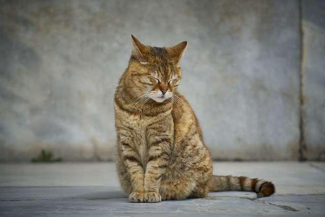 Подборка фото с котиками. Милые создания. lublusebya-lublusebya-36351227042019-3 картинка lublusebya-36351227042019-3