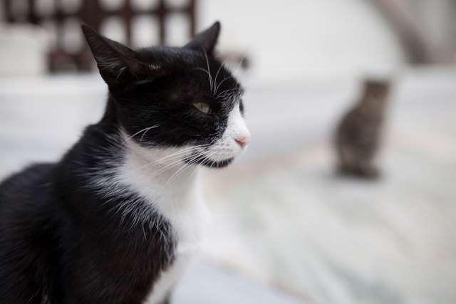 Подборка фото с котиками. Милые создания. lublusebya-lublusebya-36351227042019-4 картинка lublusebya-36351227042019-4