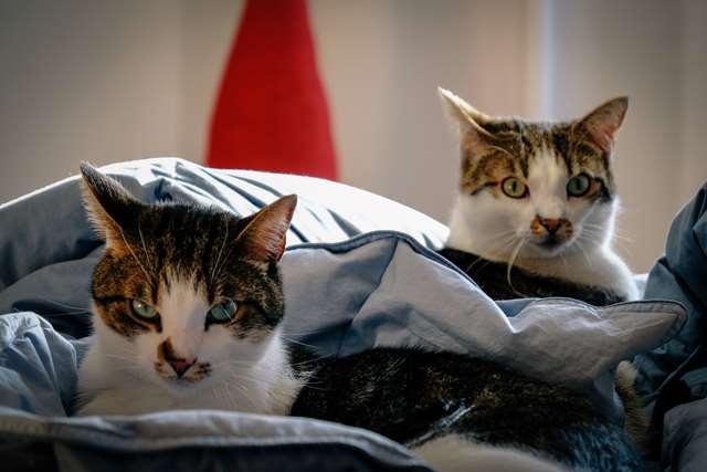 Подборка фото с котиками. Милые создания. lublusebya-lublusebya-36351227042019-6 картинка lublusebya-36351227042019-6