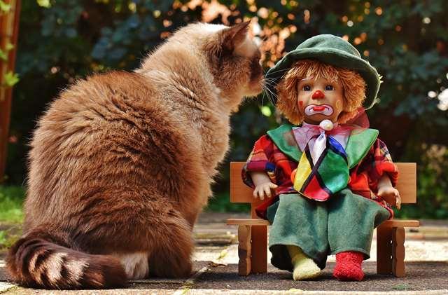Подборка фото с котиками. Милые создания. lublusebya-lublusebya-36351227042019-8 картинка lublusebya-36351227042019-8