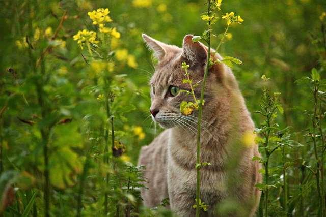 Подборка фото с котиками. Милые создания. lublusebya-lublusebya-36351227042019-9 картинка lublusebya-36351227042019-9