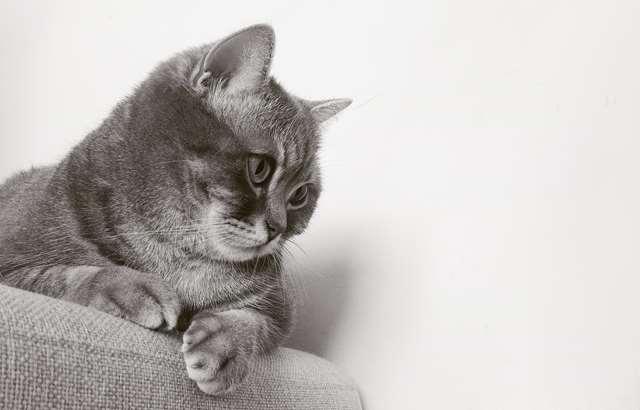 Подборка фото с котиками. Милые создания. lublusebya-lublusebya-37091227042019-1 картинка lublusebya-37091227042019-1