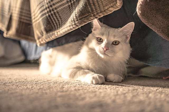 Подборка фото с котиками. Милые создания. lublusebya-lublusebya-37091227042019-10 картинка lublusebya-37091227042019-10