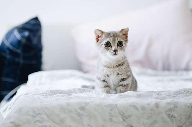 Подборка фото с котиками. Милые создания. lublusebya-lublusebya-37091227042019-12 картинка lublusebya-37091227042019-12