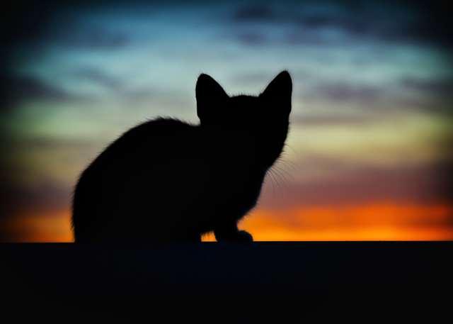 Подборка фото с котиками. Милые создания. lublusebya-lublusebya-37091227042019-13 картинка lublusebya-37091227042019-13