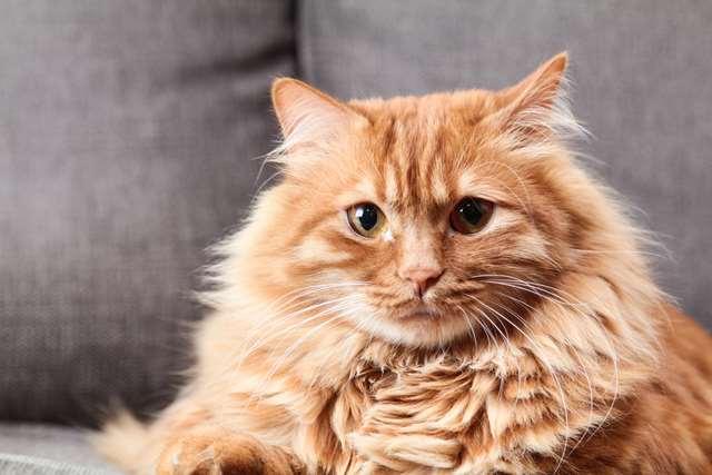 Подборка фото с котиками. Милые создания. lublusebya-lublusebya-37091227042019-15 картинка lublusebya-37091227042019-15