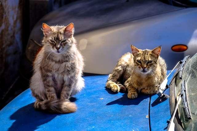 Подборка фото с котиками. Милые создания. lublusebya-lublusebya-37091227042019-17 картинка lublusebya-37091227042019-17