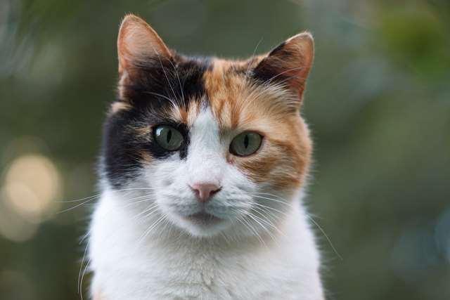 Подборка фото с котиками. Милые создания. lublusebya-lublusebya-37091227042019-2 картинка lublusebya-37091227042019-2