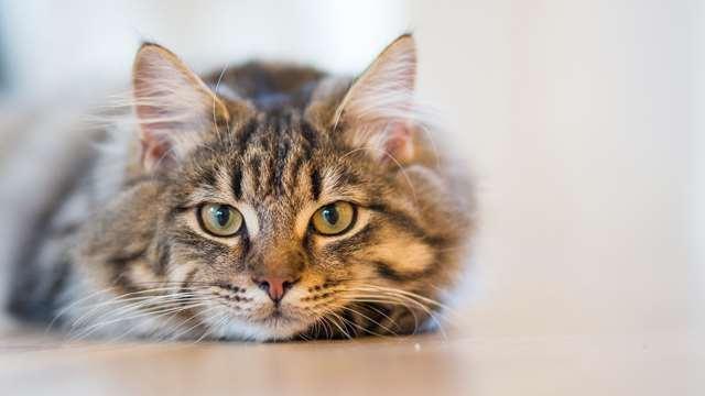 Подборка фото с котиками. Милые создания. lublusebya-lublusebya-37091227042019-3 картинка lublusebya-37091227042019-3