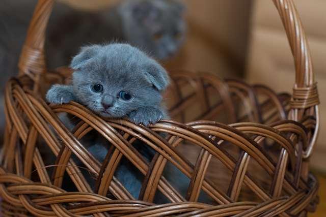 Подборка фото с котиками. Милые создания. lublusebya-lublusebya-37091227042019-4 картинка lublusebya-37091227042019-4
