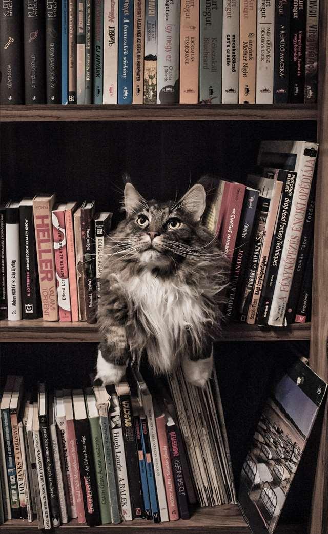 Подборка фото с котиками. Милые создания. lublusebya-lublusebya-37091227042019-8 картинка lublusebya-37091227042019-8