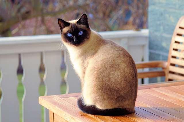 Подборка фото с котиками. Милые создания. lublusebya-lublusebya-46341227042019-11 картинка lublusebya-46341227042019-11
