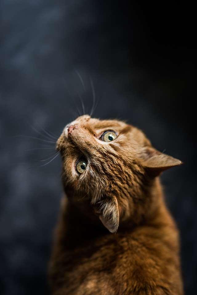 Подборка фото с котиками. Милые создания. lublusebya-lublusebya-46341227042019-14 картинка lublusebya-46341227042019-14