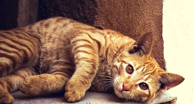 Подборка фото с котиками. Милые создания. lublusebya-lublusebya-46341227042019-17 картинка lublusebya-46341227042019-17