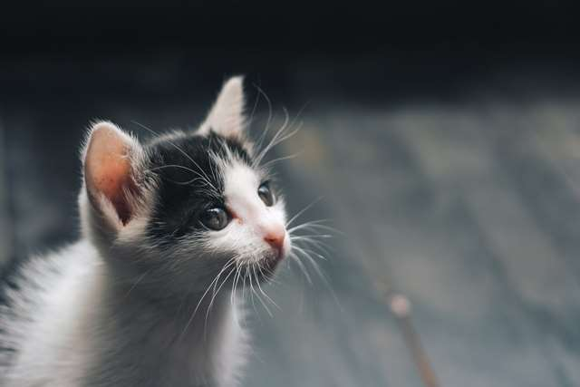 Подборка фото с котиками. Милые создания. lublusebya-lublusebya-46341227042019-2 картинка lublusebya-46341227042019-2