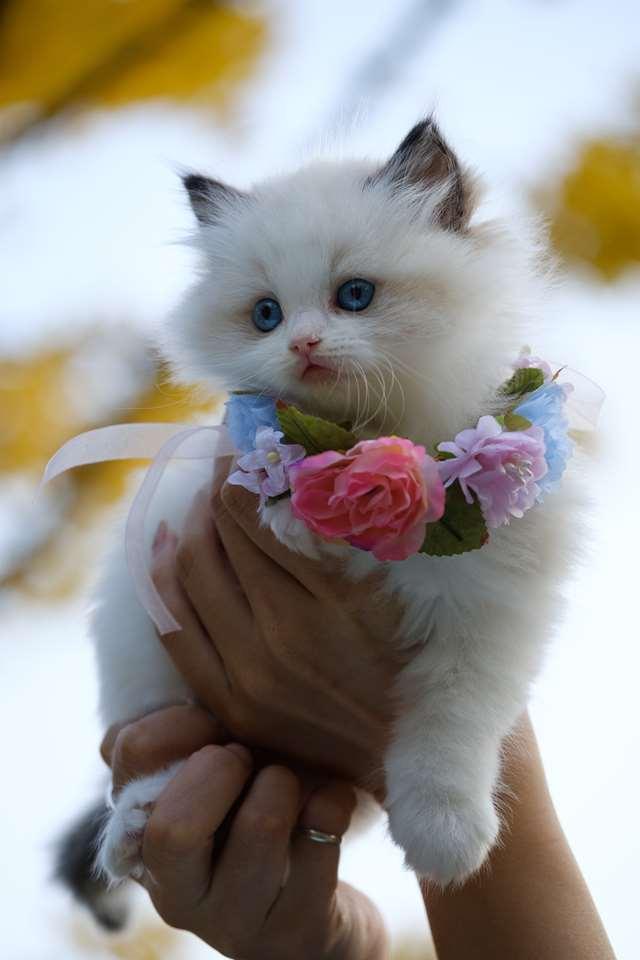 Подборка фото с котиками. Милые создания. lublusebya-lublusebya-46341227042019-3 картинка lublusebya-46341227042019-3