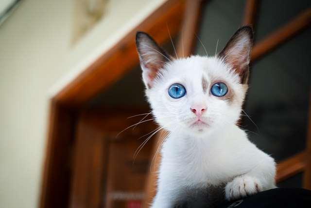Подборка фото с котиками. Милые создания. lublusebya-lublusebya-46341227042019-4 картинка lublusebya-46341227042019-4