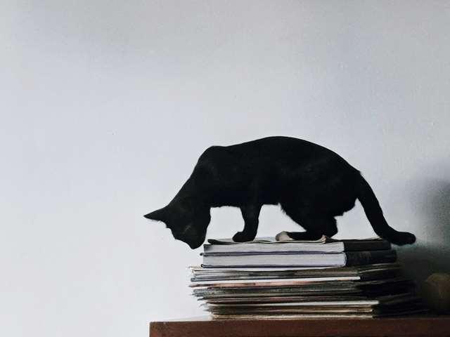 Подборка фото с котиками. Милые создания. lublusebya-lublusebya-46341227042019-5 картинка lublusebya-46341227042019-5
