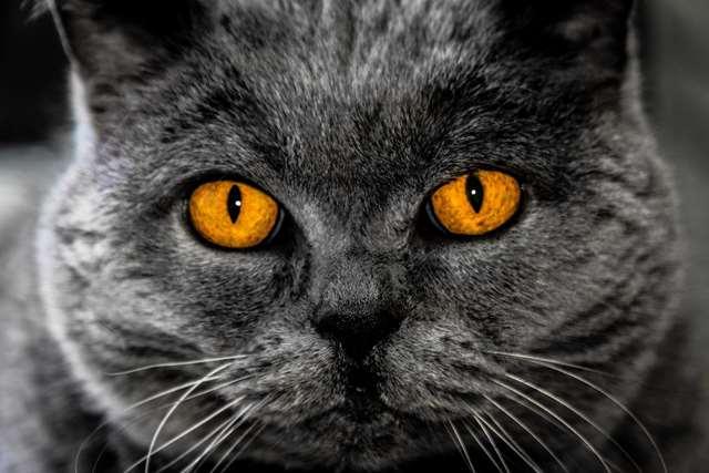 Подборка фото с котиками. Милые создания. lublusebya-lublusebya-46341227042019-7 картинка lublusebya-46341227042019-7