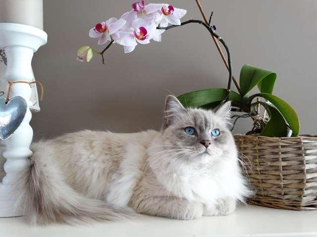 Подборка фото с котиками. Милые создания. lublusebya-lublusebya-46341227042019-8 картинка lublusebya-46341227042019-8