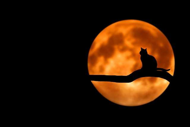 Подборка фото с котиками. Милые создания. lublusebya-lublusebya-52201227042019-0 картинка lublusebya-52201227042019-0