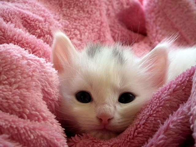 Подборка фото с котиками. Милые создания. lublusebya-lublusebya-52201227042019-1 картинка lublusebya-52201227042019-1