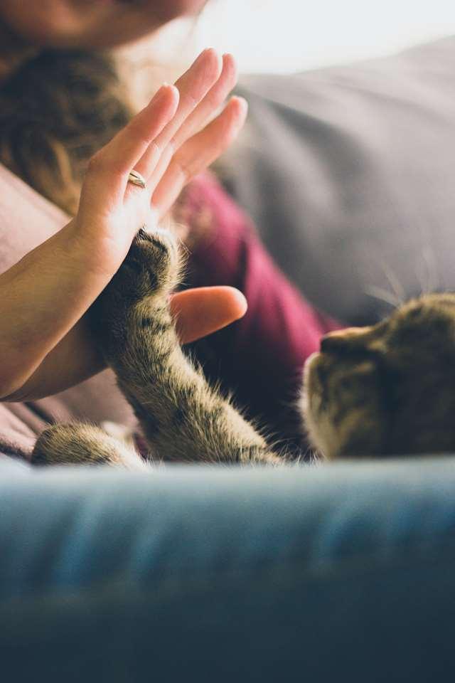 Подборка фото с котиками. Милые создания. lublusebya-lublusebya-52201227042019-11 картинка lublusebya-52201227042019-11