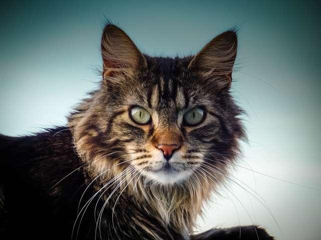 Подборка фото с котиками. Милые создания. lublusebya-lublusebya-52201227042019-13 картинка lublusebya-52201227042019-13