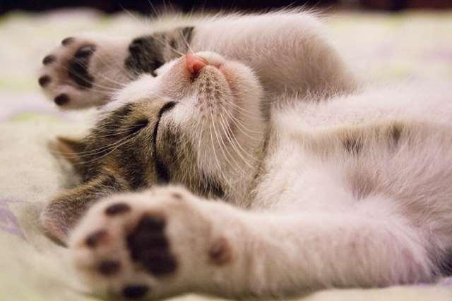 Подборка фото с котиками. Милые создания. lublusebya-lublusebya-52201227042019-14 картинка lublusebya-52201227042019-14