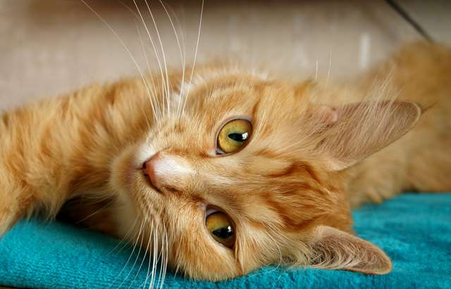 Подборка фото с котиками. Милые создания. lublusebya-lublusebya-52201227042019-15 картинка lublusebya-52201227042019-15